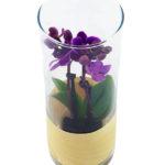 ILSPIRATI - orchidee